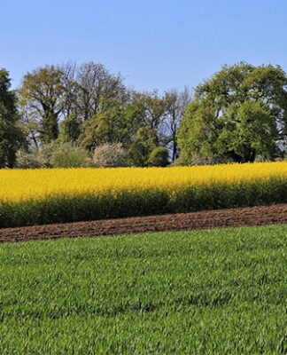 Skuteczne zwalczanie chwastów kukurydza